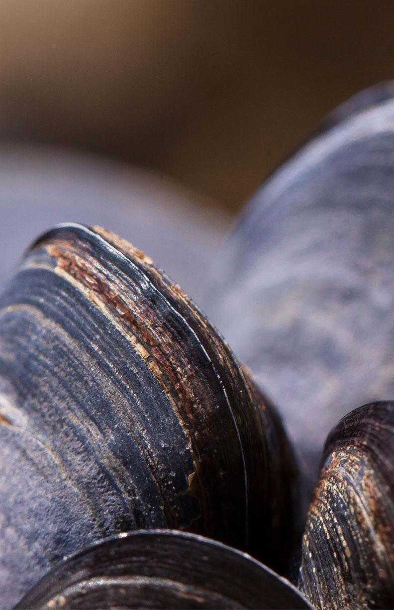More about Freshwater Mussels event