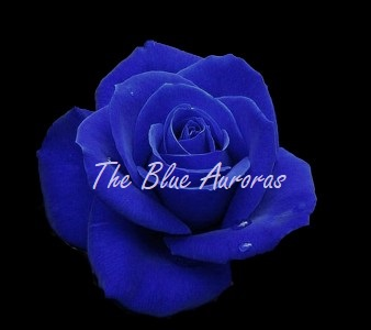 A vibrant blue rose is pictured against a dark background